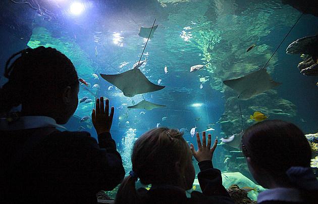 Aquarium Reopens After ?5m Redevelopment